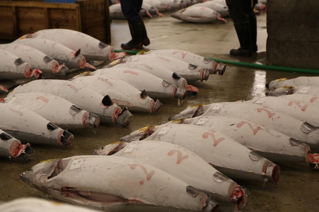 07 Tuna Auction