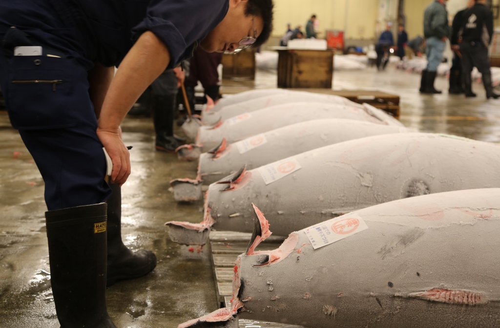 09  Tuna Auction