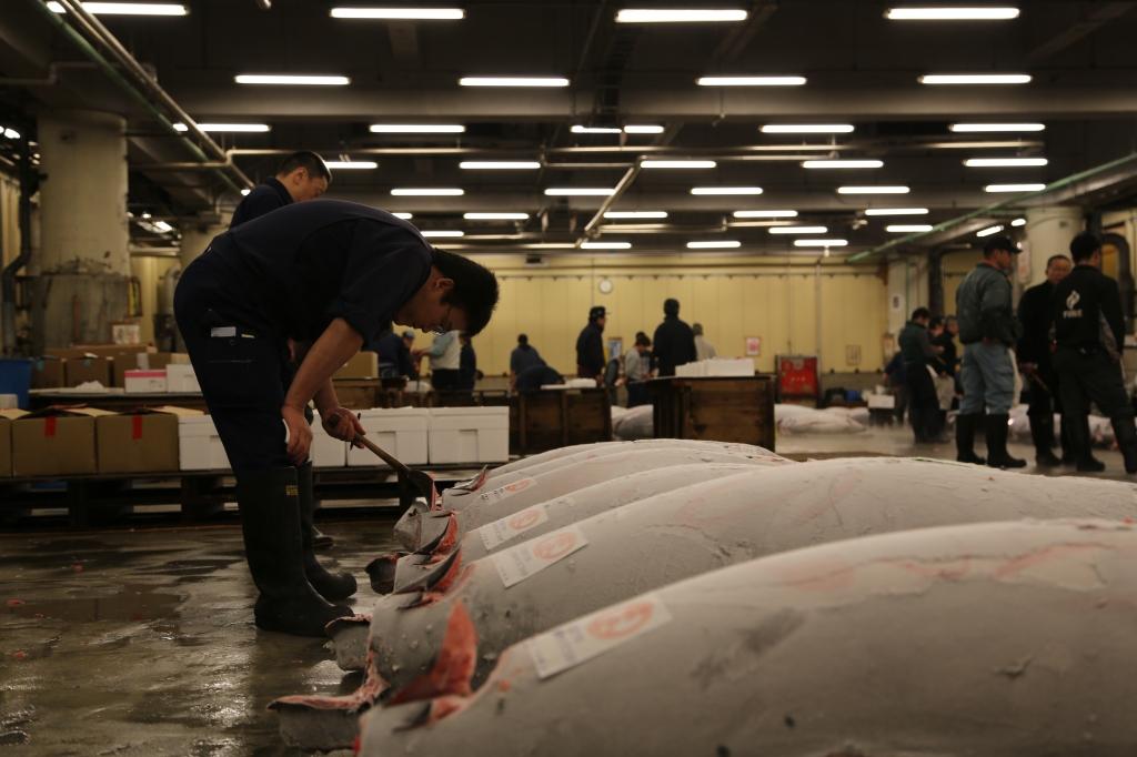 10 Tuna Auction