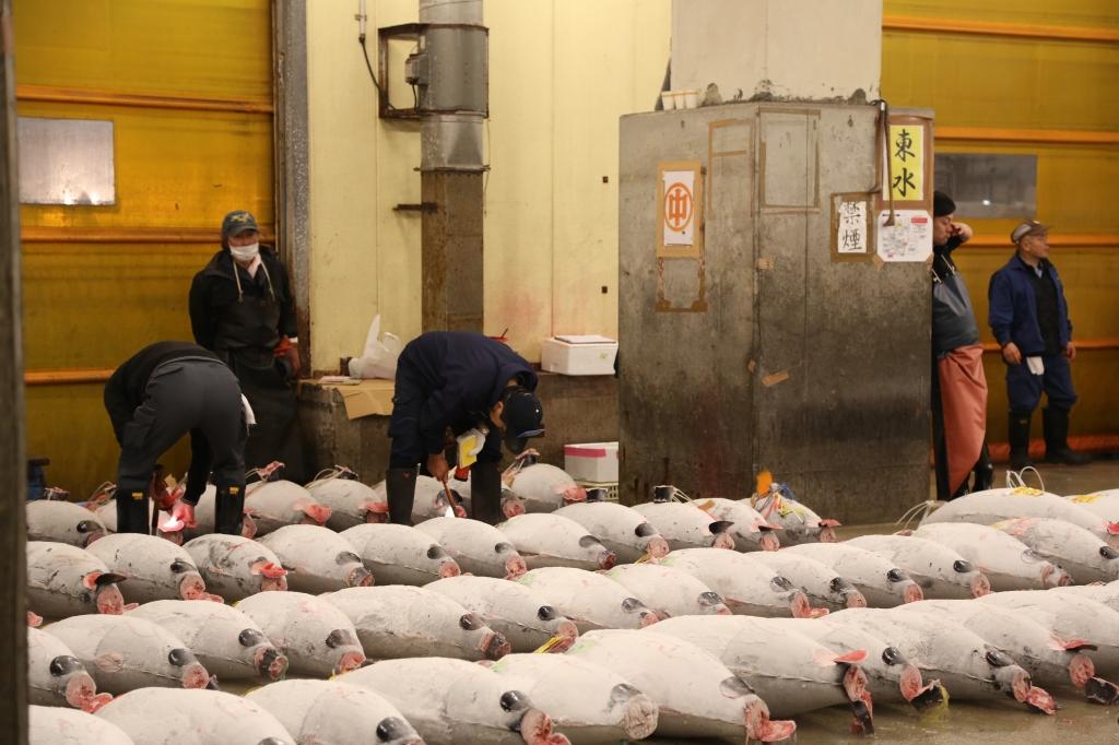 17 Tuna Auction