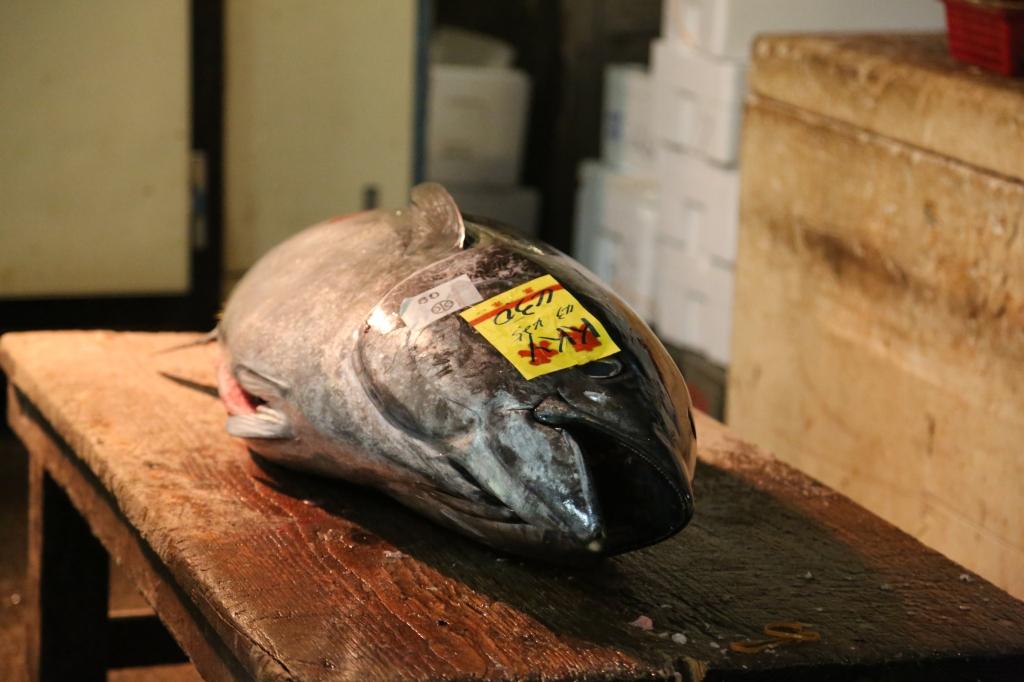 20 Tuna Auction