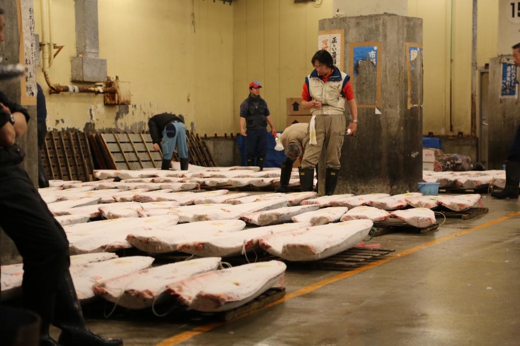 22 Tuna Auction