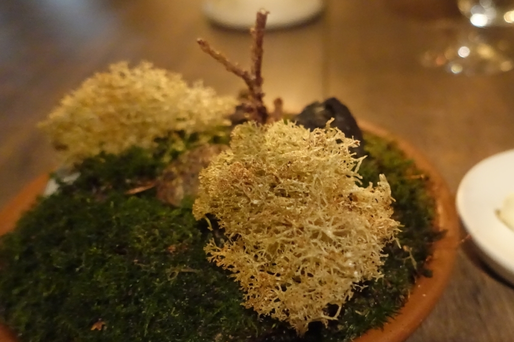 06 - Reindeer moss and cep mushrooms