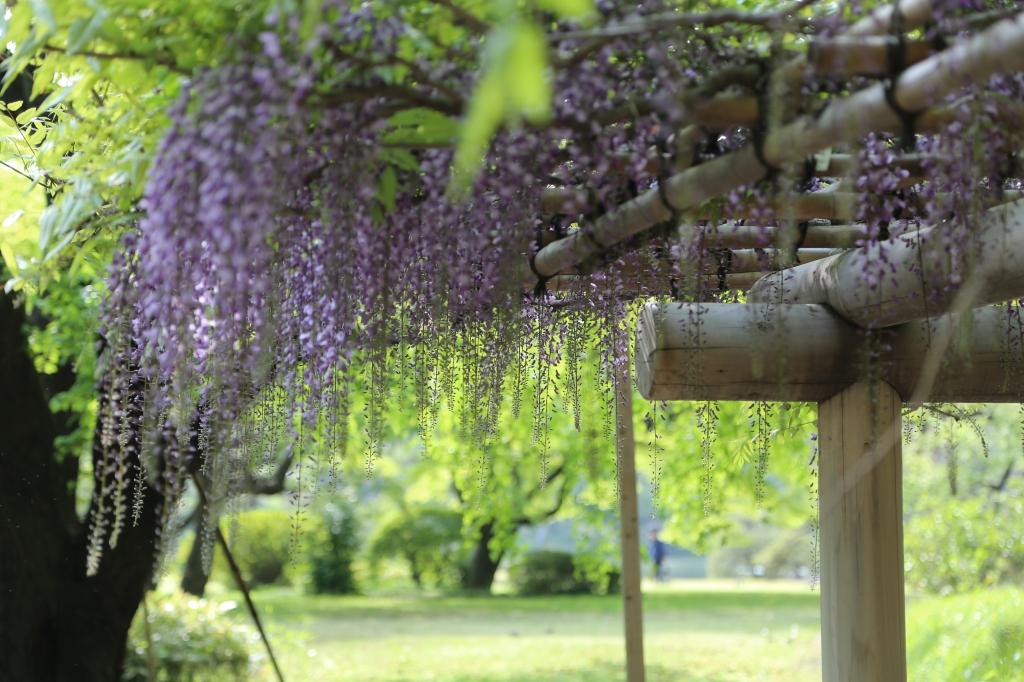 01 Rikugien Garden