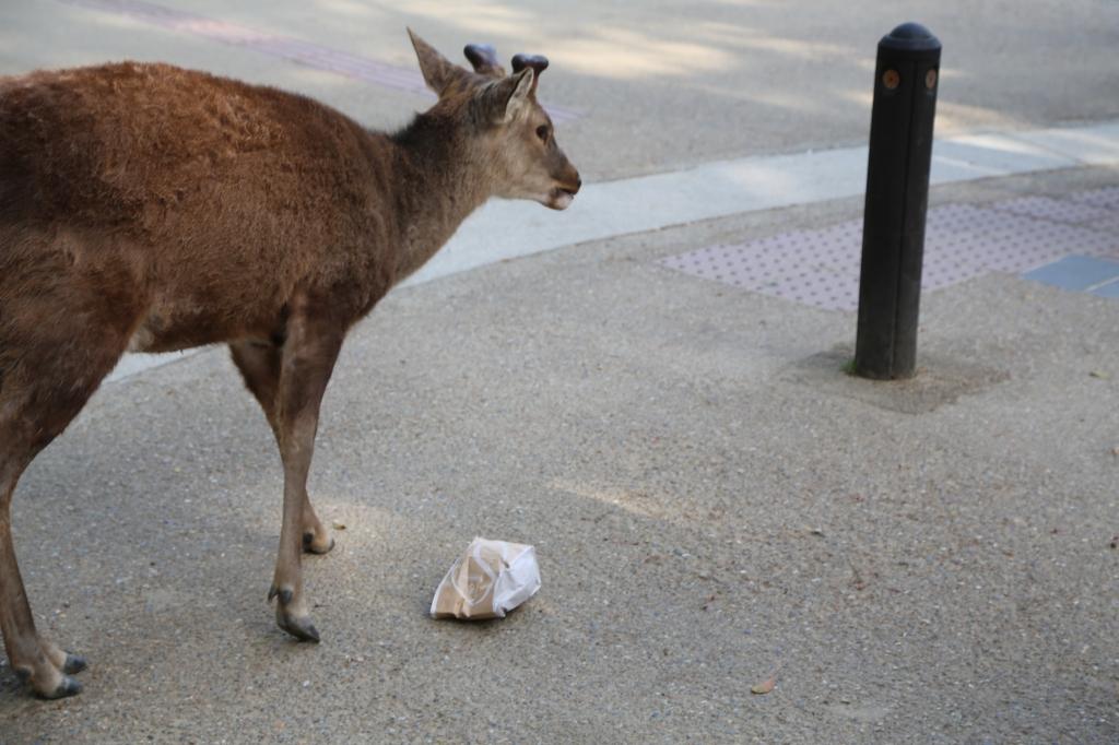 04 Nara