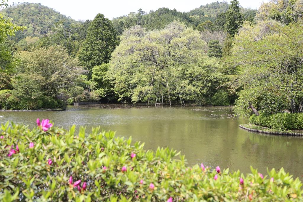 11 Ryōan-ji